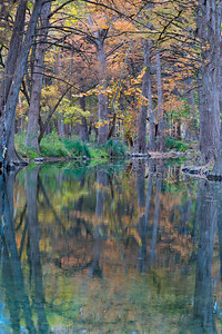 Fall on the Cypress