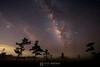 Milky way over Big Cypress