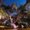 Garret Oak Tree