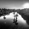 Tallahatchie Cypress (BW)