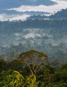 Sunrise near Danum Valley Field Centre, Borneo, Sabah, Malaysia