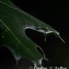 2017-07-11 06 47 48 Leaf
