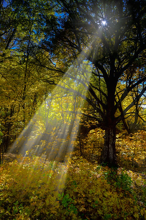 Sun shines through the changing leaves of fall in Vadnais Heights, Mn, #1818