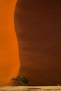 Red dunes of the Namib Desert, Namibia