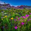 Broken Top Wildflowers