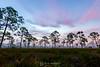 Foggy forest sunrise