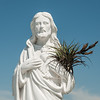 Bromeliad Jesus