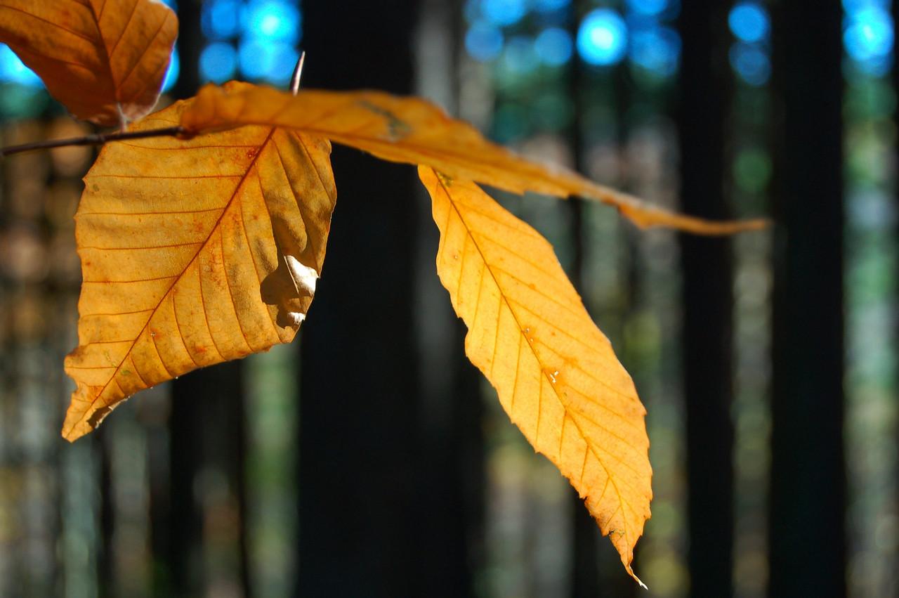 DSC_0320 Hocking in Fall