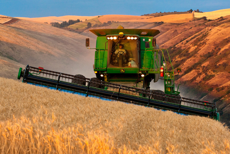 Harvesting wheat in the Palouse region of Washington