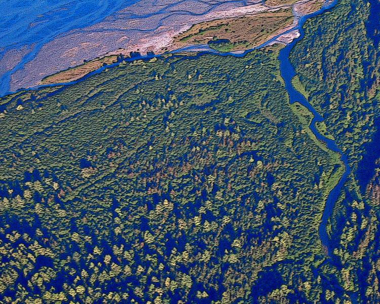 Chilkoot River delta, near Haines, Alaska.