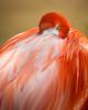 Flamingo Portrait