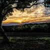 Shady Llama Sunset