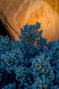 Ancestral Puebloan pictographs above Shepherdia rotundifolia (Roundleaf buffaloberry), Escalante / Grand Staircase National Monument,