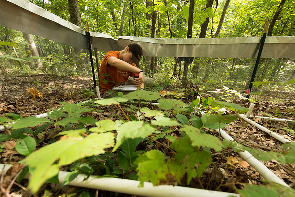 Seedling census, Species-Pool Functional Diversity & Fire Experiment, Tyson Research Center, Missouri