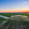Cotton Pivot Sunset