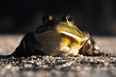 Jeremiah was a Bullfrog