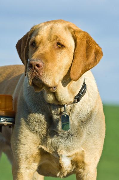 The farm dog