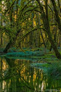 El bosque encantado / The Enchanted Forest