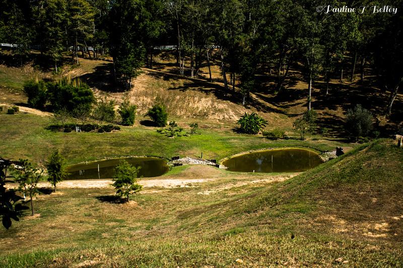 Imaharas Garden 4 Post