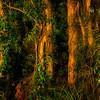 Tea Tree Forest