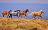 Wild Equine Exuberance