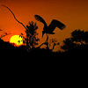 Pelican sunset