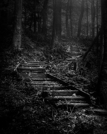 Forest Stairs