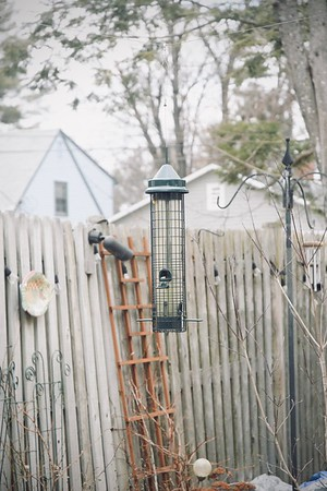 The Bird Feeder in Winter.