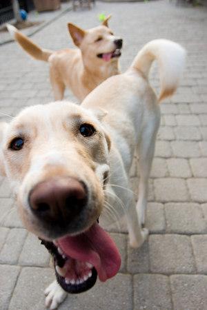 Durham, Washington Animal Rescue League, Washington DC