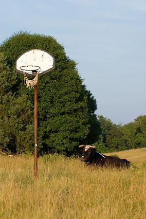 Hoop and oxen, Scottie's Place, Peterstown West Virginia