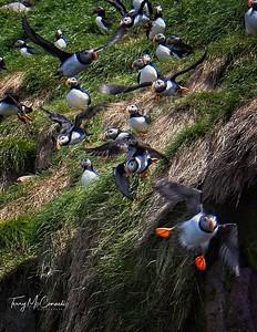 Newfoundland Pictures , Avalon Penninsula