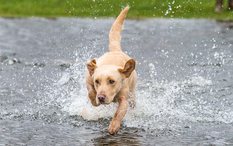 Jack on Water Spring 2014