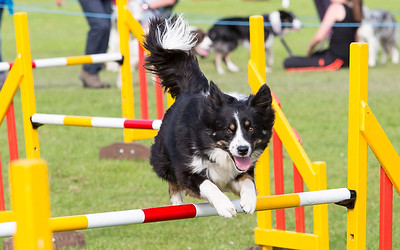 Lune Dog Agility June 2014