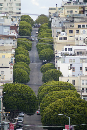 View up Lombard St, San Francisco