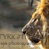 South Africa, Mohoholo Wildlife Refuge