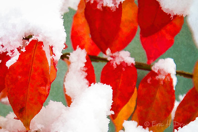 Early Snow on Red Leaves, Oro-Medonte, Ontario