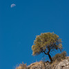 2_Colin Nash_Spanish Daytime Moon and Tree