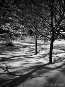 Shadows on First Snow, Horseshoe  Valley, Ontario