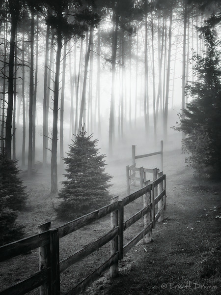 Foggy Morning, Horseshoe Valley, Ontario