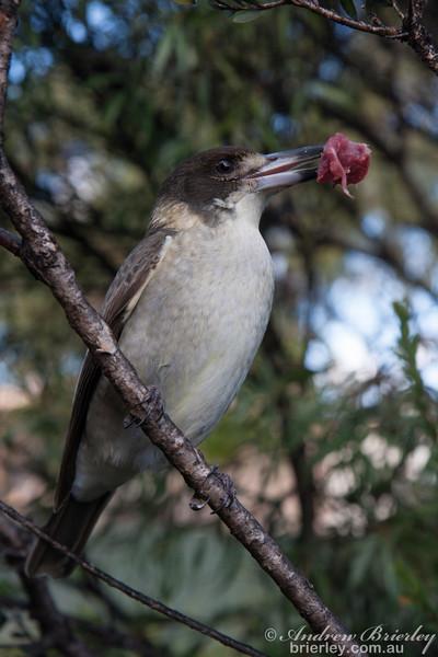 Birds of Bundeena