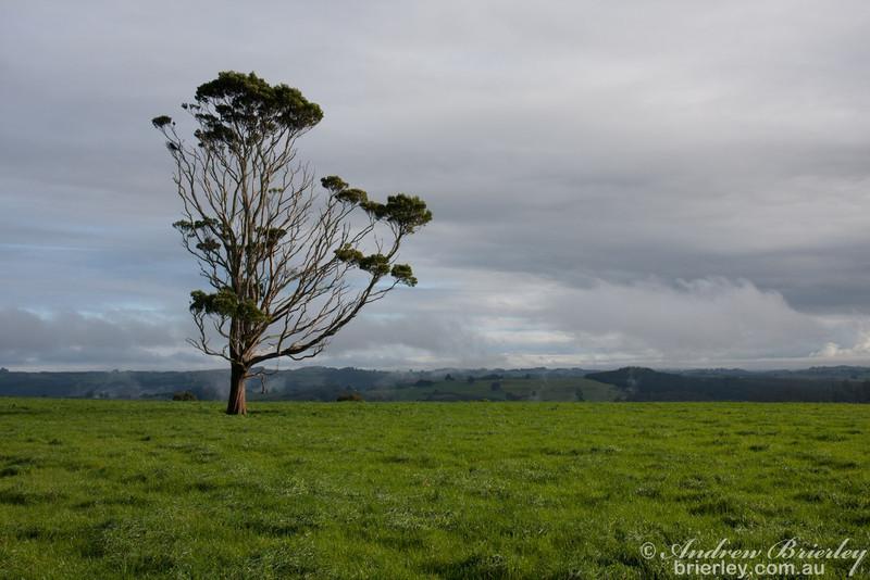 Tasmania June 2010