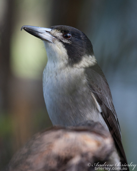 Birds of Bundeena