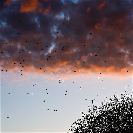 "The Birds Know Sailor's Delight 20"" x 20"" print on lustre media, unmounted - $125 Quotes for other sizes, media, mounting or framing upon request"