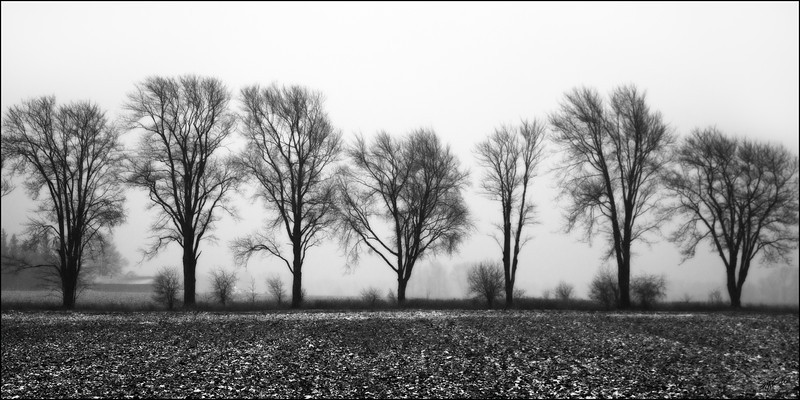 "Seven Trees<br /> Stratford, ON<br /> 24""x36"" Print - $125  <br /> Other sizes and mounting available"