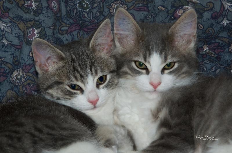 Sisters .....Sophie & Delilah