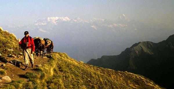 Kauri Pass , India