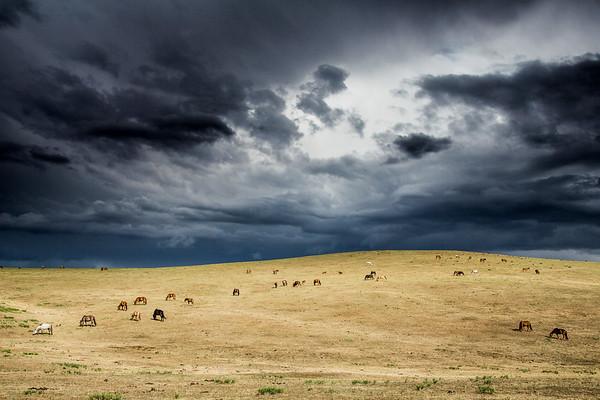 Horses, Mongolia Steppe grassland Altanbulag