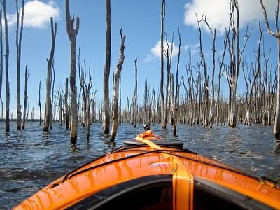 Stick Forest, Lake Munmorah, NSW Australia
