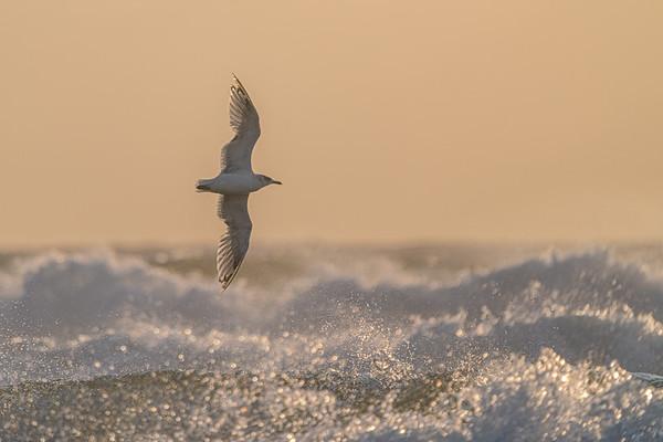 #seagull #sony #a7riii #sel200600g