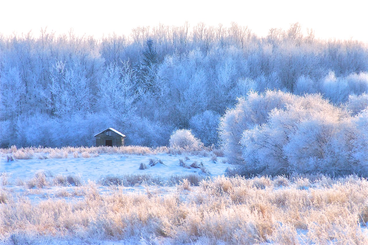 Frosty morning on the Prairies